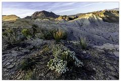 Badlands Afternoon (AnEyeForTexas) Tags: penformation badlands bigbendarea desert desertlandscapes texas