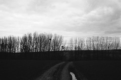 to where (analogrem) Tags: empty nothing trees branc branches horizon sky clouds overcast fields puddle road reflection analog film emptiness way