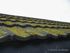 "Isle of Wight - Lichen Covered Roof • <a style=""font-size:0.8em;"" href=""http://www.flickr.com/photos/44019124@N04/8704231795/"" target=""_blank"">View on Flickr</a>"