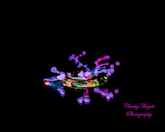 Neon Liquid Splash Chaos (CheekyAngels (catching up )) Tags: above lighting camera blue light shadow abstract motion color colour macro reflection fall texture wet up yellow metal digital speed relax effects mirror fly milk high nikon focus chaos dof lift close purple time top unique flash smooth relaxing calming surreal surface drop special formation reflect gravity burnt freeze bubble physics droplet after beyond ripples organic burst splash mass capture tamron 90mm effect liquid explode laws strobe solid collision glycerine hsp suspend d90 strobist