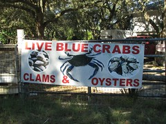 We've got crabs (jimsawthat) Tags: fisherman florida oysters crabs clams cedarkey waterman smalltown cedarkeys