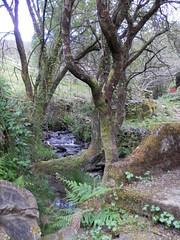 Ribeira (rgrant_97) Tags: portugal centro serra coimbra aldeia lous xisto candal aldeiasdexisto