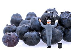 Always Wash Your Fruit (cathy.scola) Tags: fruit miniature blueberry wash ho littlepeople onwhite blueberries tinypeople hofigures