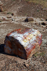 Another Wild Find (Fionn Luk) Tags: park wood trip travel summer arizona usa hot west color detail nature rock stone canon us nationalpark spring desert crystal south united details may scene national mineral 5d states southwestern luk petrified fionn petrifieddesert