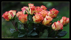 The gift of love (K. Haagestad) Tags: flowers roses orange love petals bunch bouquet bukett
