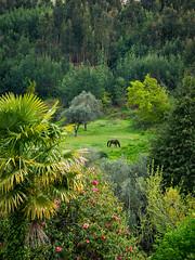 Solitrio (paulocjp) Tags: cavalos paisagem natureza spedro do sul portugal