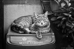 posada (heavenuphere) Tags: posada nuoro sardegna sardinia sardinie italia italy europe island cat bw 24105mm