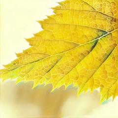 Yellow Already (Caroline.32) Tags: leaves leaf fallcolors fall yellow macro happyslidersunday slidersunday