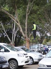 Guard keeping watch over the car park (prondis_in_kenya) Tags: kenya nairobi colddryseason uhurupark tree park guard carpark watchtower security