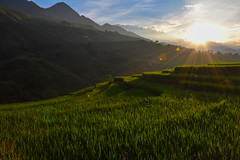 Rice fields Vietnam (MicheleSana) Tags: vietnam rice fields riso campi montagne mountain sunset tramonto asia nature natura terrazze terrace nikon trip travel viaggi vacanze escursioni