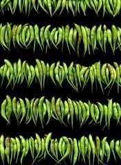 57568.01 Raphanus sativus (horticultural art) Tags: horticulturalart raphanussativus raphanus radish pods seedpods lines pattern