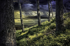 Quietude (clabudak) Tags: trees flowers sky landscape peaceful clouds bark platinumheartaward