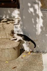 Small tiger (Steenjep) Tags: samos holiday ferie greece grækenland street cat kat kokkari