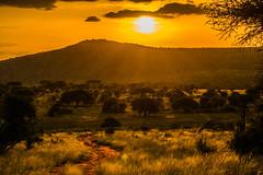 die letzten Sonnenstunden (sergei.ribant) Tags: summer sun safari savanne sunset sonnenuntergang sunrise africa afrika amboseli d7100 gelb kenia kenya nikon nature