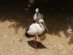 P2230368 (Gareth's Pix) Tags: aviarionacionaldecolombia baru colombia aviario bird