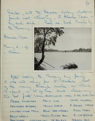n96_w1150 (BioDivLibrary) Tags: 19191982 australia browngrahama browngrahama19191982 diaries ornithologists travel museumvictoria bhl:page=48115659 dc:identifier=httpbiodiversitylibraryorgpage48115659 grahambrown fielddiary geo:country=australia
