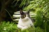 Lexie (antonioscoletta) Tags: giardino estate felini cat animals summer canon 1200d