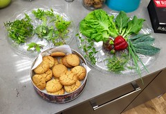 Daily Harvest and Cookies (Assaf Shtilman) Tags: lettuce leche dolce cookies chives sage mint herbs peppers harvest daily