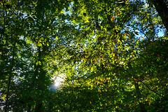 DSC05503-505_HDR (Capt Kodak) Tags: autumn chattahoocheerivernationalrecreationarea fall hdrefexpro2 madefrom3images medlockbridgepark nationalparkservice nikcollectionbygoogle niksoftware photomerge