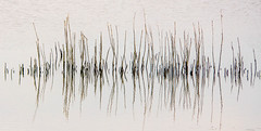 Water calligraphy (zoomleeuwtje) Tags: ngc art relflection water reflection reeds supershots