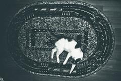 Cats Edition 8 - (18) (Robert Krstevski) Tags: robertkrstevskiblogspotcom robertkrstevski catsedition8 catsphotography cat cats pet pets animal animals animallovers cute cuteness kitty kitten kittens gato gatos    kotka la chatte animalslove lovely flicker popular