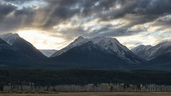 Autumn in the Rockies (Tinker & Rove) Tags: rockymountains britishcolumbia transcanada outdoors mountainrange snowpeaks pine fir evergreen forest poplar trees sky clouds sunset autumn fall landscape panorama moody atmospheric mountain foothill golden canada