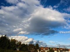 Afternoon (regina_jaenicke) Tags: day293 p3662016