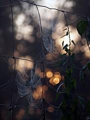 Spider's web 1 (Oczyma Duszy) Tags: parkkrajobrazowy dolinabystrzycy bystrzyca rzeka mga magia lovecraft krajobraz urbex jarnotw rosa pajczyna pajk poranek ranek wschdsca bokeh ba olympusepl5 mzuikodigital river mist fog landscape park magic fairytale dew web spider morning sunrise
