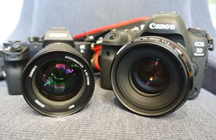 Fast 50mm Prime Lenses — the Zhongyi f/0.95 and Canon f/1.2