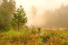 Morning Mist (Peter Vestin) Tags: nikondf sigma50mf14dghsmart adobecreativecloudphotography topazlabscompletecollection skattkrr karlstad vrmland sweden nature landscape trees mist sunrise