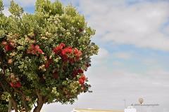 DSC_0511_2048 (a.marquespics) Tags: floresvermelhas cu nublado arvore tree redflowers flowers nikon d610 50mmf14 sky flora portugal