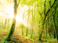 (Nikola Ostrun) Tags: forest tree trees nature naturallight natural light shadow sunrise sunrays sunlight outdoor walk fall green yellow landscape woodland wood woods