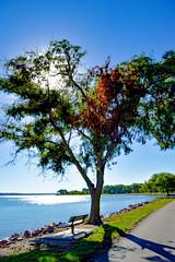 Heart Shaped Tree #tree #autumn #fall #crsip #missouririver #southdakota #river #water #trees #colors (lizzierussaw1) Tags: crsip colors autumn tree river southdakota missouririver fall water trees