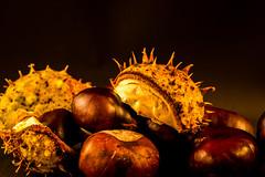 Kastanienzeit (photalena) Tags: 7dwf flora nature herbst autumn kastanien