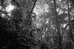 Jungle (pacco_racco) Tags: jungle forest trees light shadows bokeo middlemekong northernlaos leicam6 leicasummicron35mmf20asph kodaktrix400