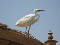 IMG_0860 (Sergio_from_Chernihiv) Tags: hurghada egypt 2008