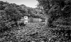 Deepdale Beck meets the River Tees . (wayman2011) Tags: fujifilmx70 lightroom wayman2011 bwlandscapes mono becks streams rivers rivertees deepdale trees rocks weirs pennines dales teesdale barnardcastle countydurham uk