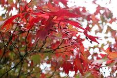 Tree (Pat's_photos) Tags: westonbirt tree