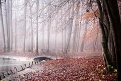 Autumn Melancholy (judithrouge) Tags: forest wood wald brücke bridge bach stream creek mist fog nebel neblig foggy misty autumn herbst laub leaves siebentischwald augsburg mystical mystisch mood stimmung morgens morgenstimmung