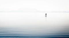 Steinhude (9 von 21).jpg (uweihe1) Tags: steinhude steinhudermeer see morgenstunde morning overexposure monochrome blacknwhite blackandwhite man water lonely watersport lake board paddling paddle standuppaddlingboard