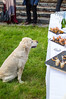 DSC_1005.jpg (steve.castles) Tags: dog wedding food lacune france hungry