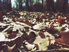 Autumn (Hamza_kh) Tags: autumn leaves tress trees nature chill forest sunny fun brown la sky blur close up light ground