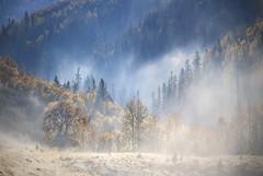 El bosque encantado (Inmacor) Tags: pirineos vallesoccidentales bosque otoo autumn tree arboles montaa mountain niebla fog inmacor huesca magic mgico cuento moment landscape nature naturaleza