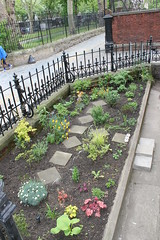 Stepney Green Court Gardens May 2013 (Carol B London) Tags: gardens garden estate contest competition ha ourgarden e1 sgc ids stepney revamp inbloom londone1 towerhamlets stepneygreencourt industrialdwellings may2013 towerhamletsinbloom