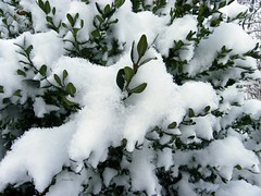 IMGP0261 (Peti0061) Tags: winter snow bush hungary snowy bokor magyarország havas hó winter2010 vasmegye cserje peti0061 nagygeresd