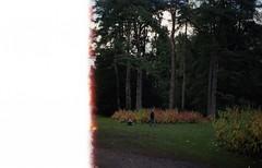 . (dichohecho) Tags: trees film leaves analog analogue pentaxmesuper mesuper westonbirtarboretum rollend kodakcolorplus200 ubuphotosoc dichohecho roll60