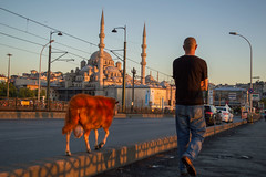 DSC_0524 (zeynepcos) Tags: istanbul sunset people eminonu karakoy galata bridge sheep man alone lonely