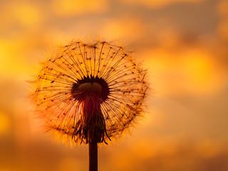 Catching the last sun rays (2)