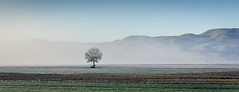 Alone in the mist (lizcaldwell72) Tags: mist trees sky hawkesbay newzealand frost light