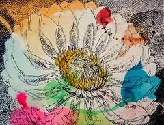 DSC0966851 (scott_waterman) Tags: scottwaterman painting paper ink watercolor gouache lotus lotusflower